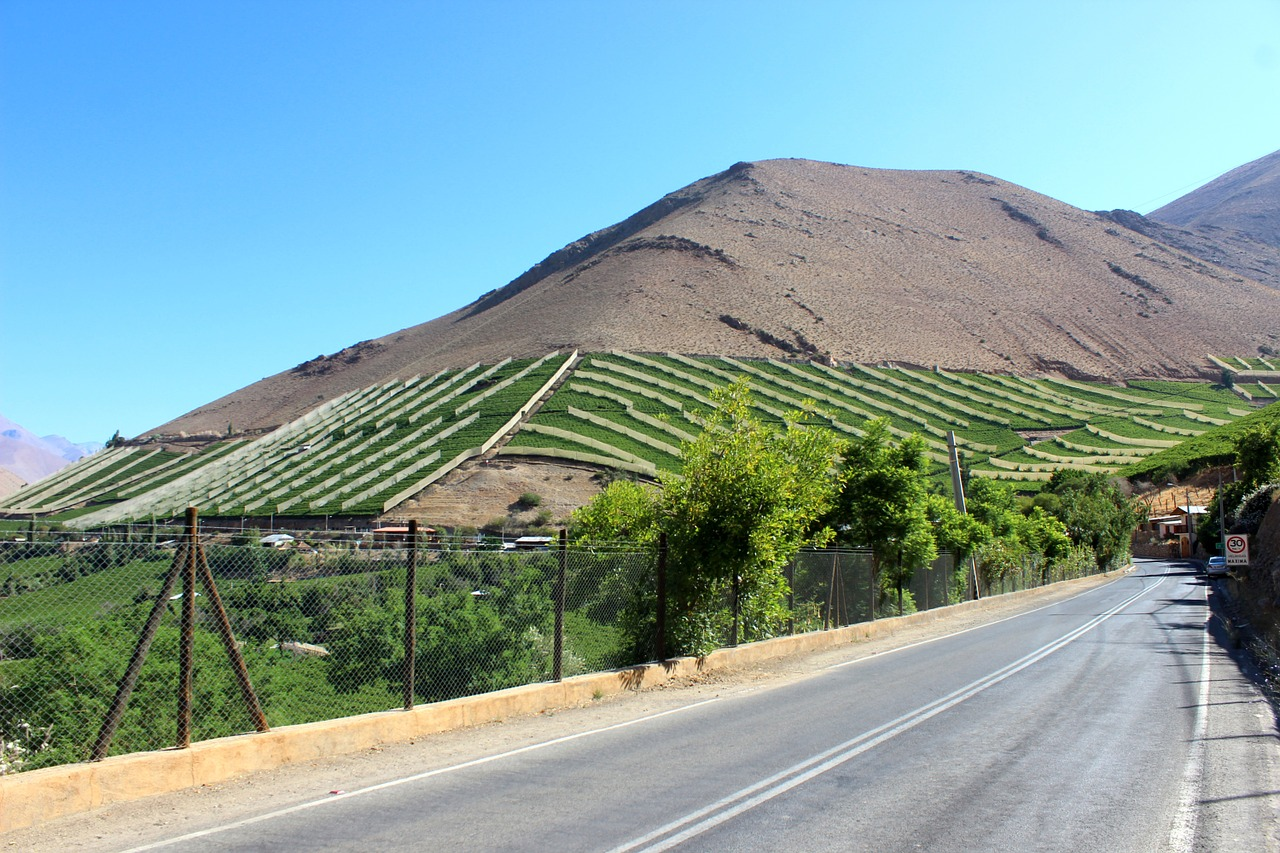 Ein Weinberg bei Pisco Equi in Chile.